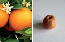 arancia-amara